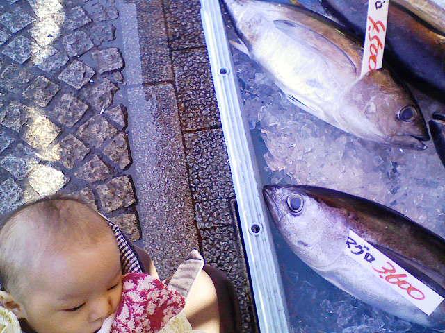 お魚ツアー