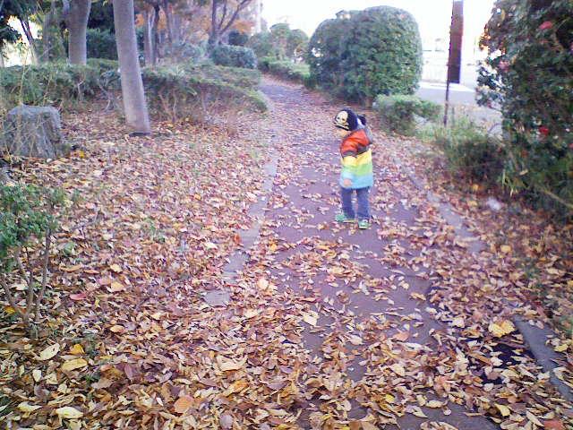 葉っぱ、かさこそ。